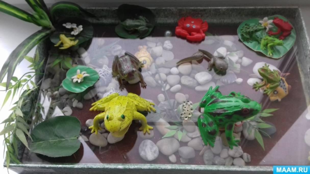 Экологическая проектная деятельность «Распрекрасные лягушки у болота на опушке»