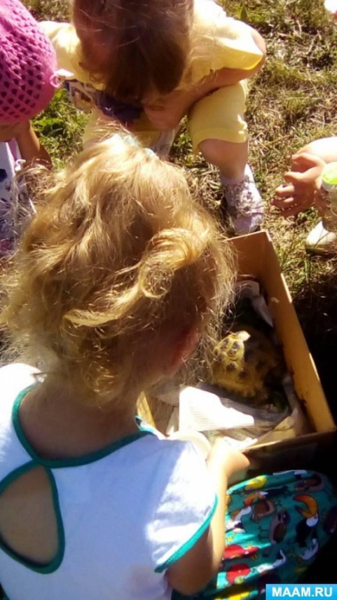 Конспект занятия «Наблюдение за черепахой»