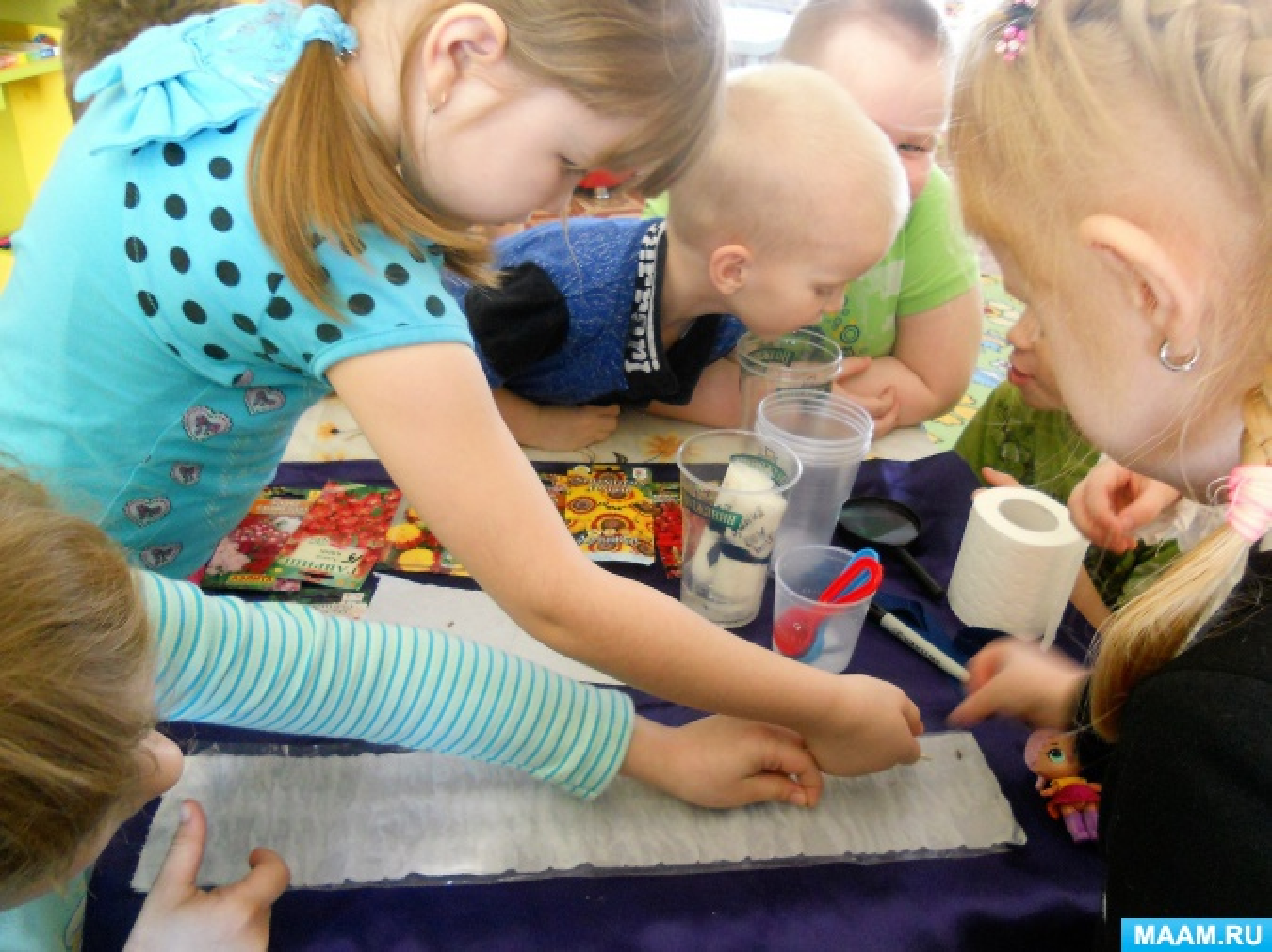 Мастер-класс «Выращивание рассады в рулончиках». Экспериментальная деятельность в детском саду