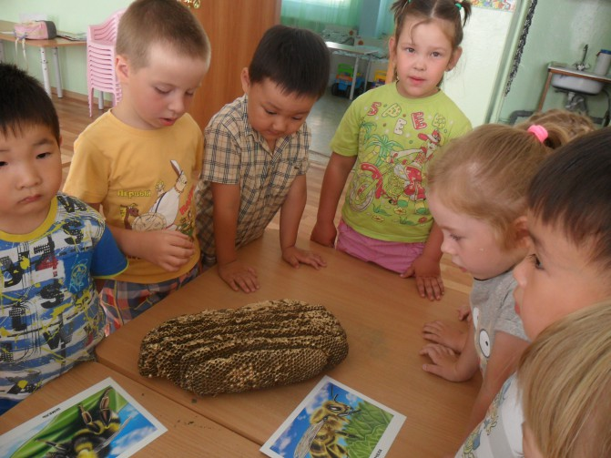 Проект «Золотая пчелка» средняя группа (фотоотчет)