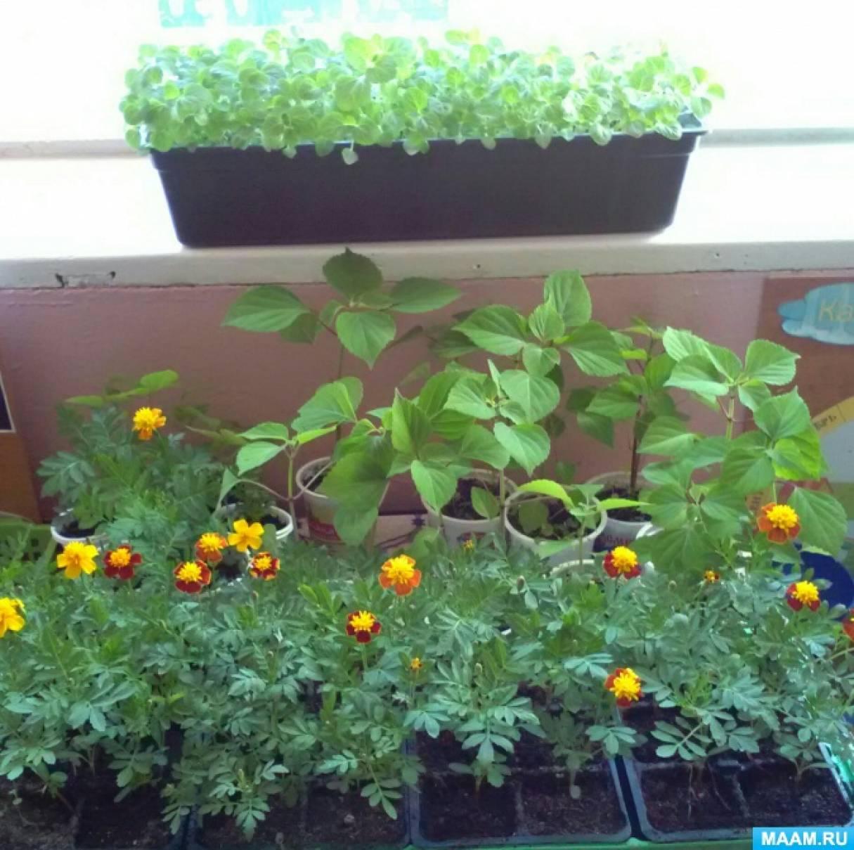 Мы вырастим цветочную рассаду для