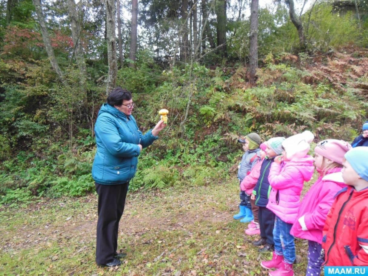 как знакомить детей с лесом