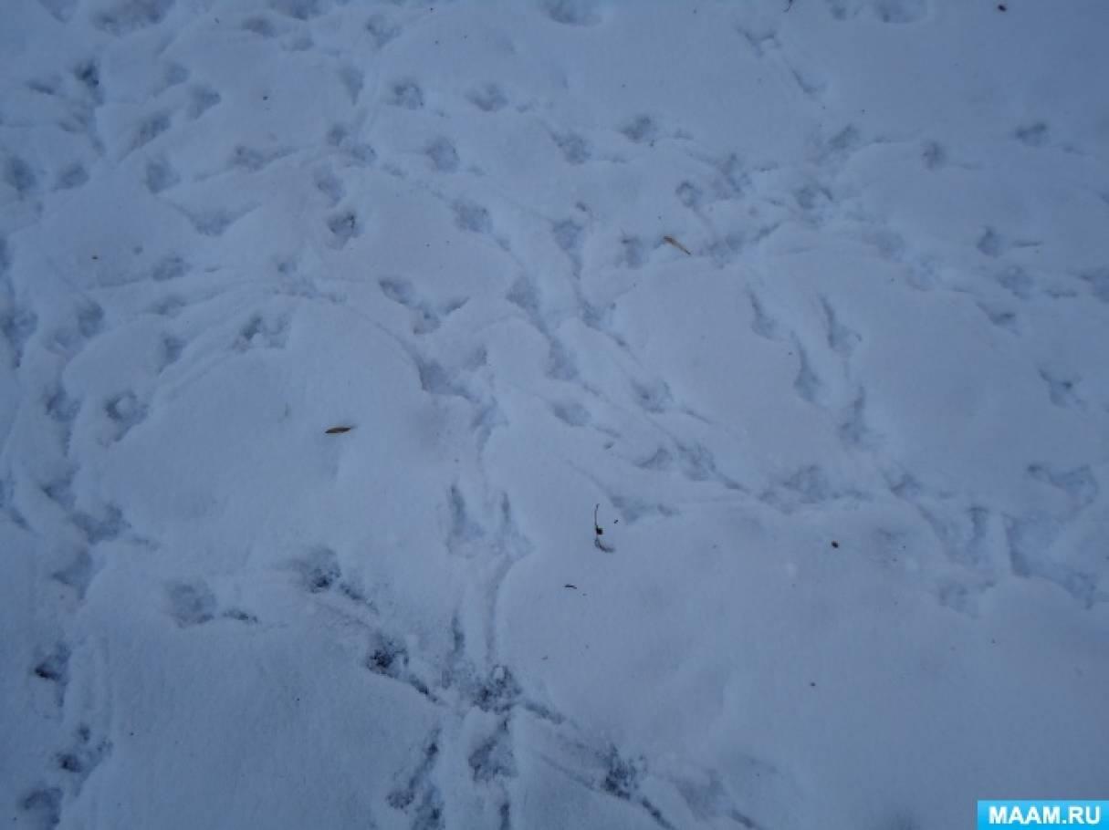 Конспект прогулки «Сравнивание следов воробья и вороны»
