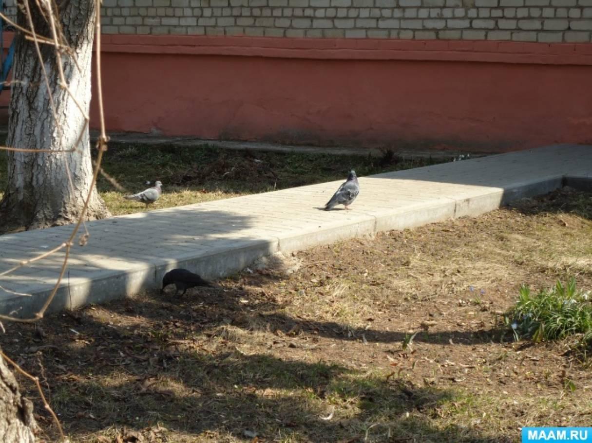 Конспект прогулки «Наблюдение за птицами» с экспериментированием