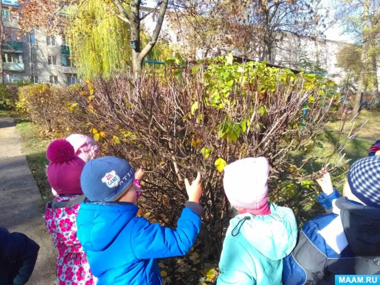 Конспект прогулки «Наблюдение за наличием почек у деревьев и кустарников»