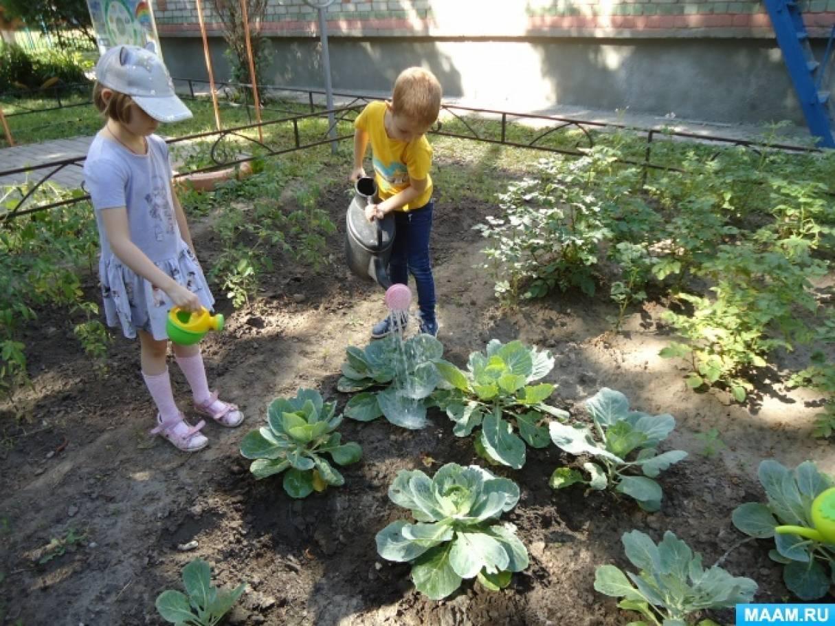 Конспект прогулки «Наблюдение за поливом растений на огороде и в цветнике»