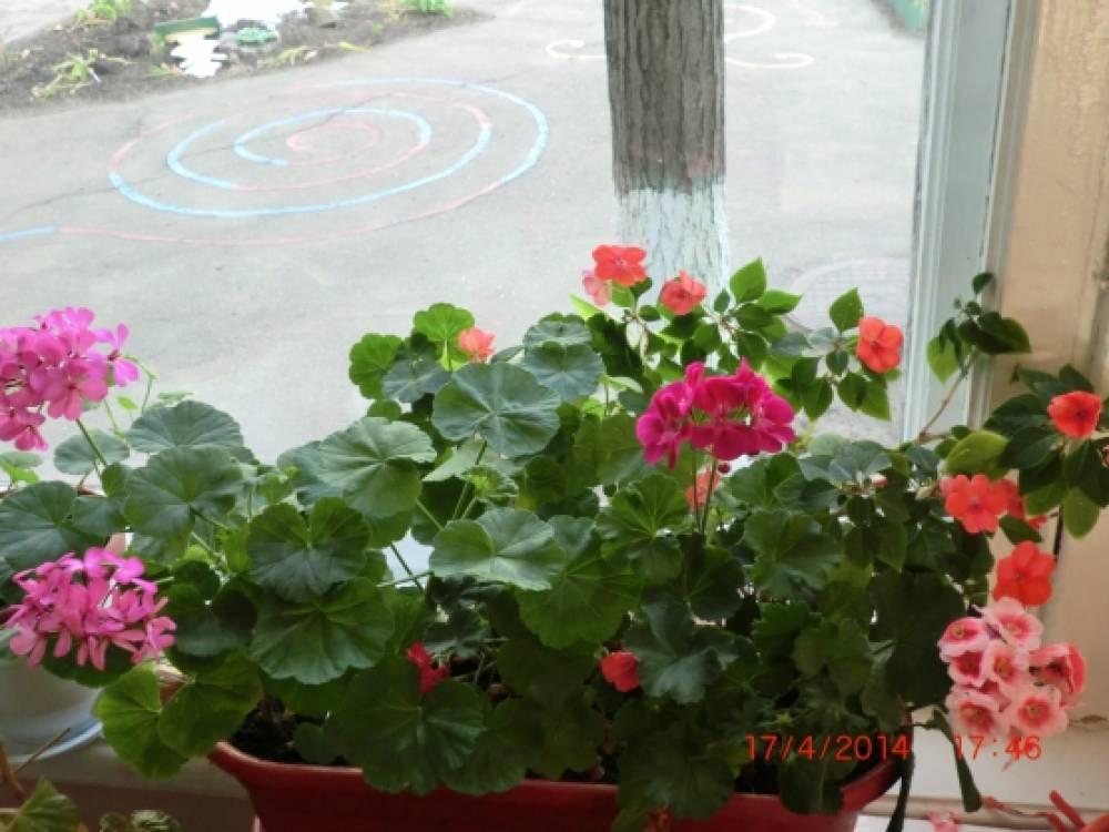конспект нод в младшей группе знакомство с комнатными растениями