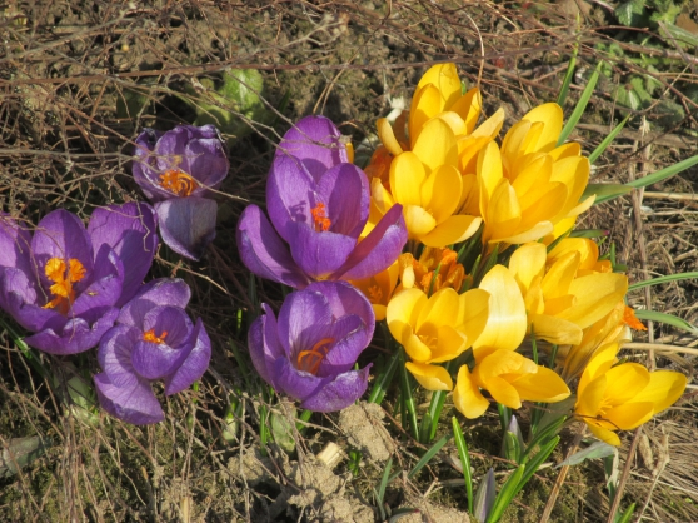 Картинки полевых работ весной для дошкольников