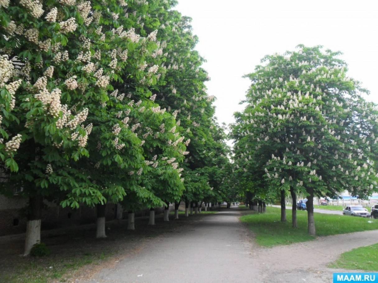 Конспект комплексного занятия «Деревья на аллеях родного города. Цветущая ветка каштана».