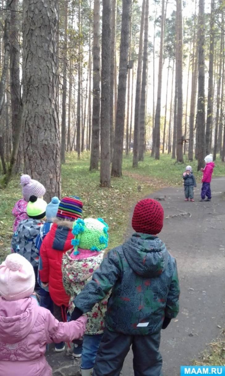Наблюдение за белками в осеннем лесу