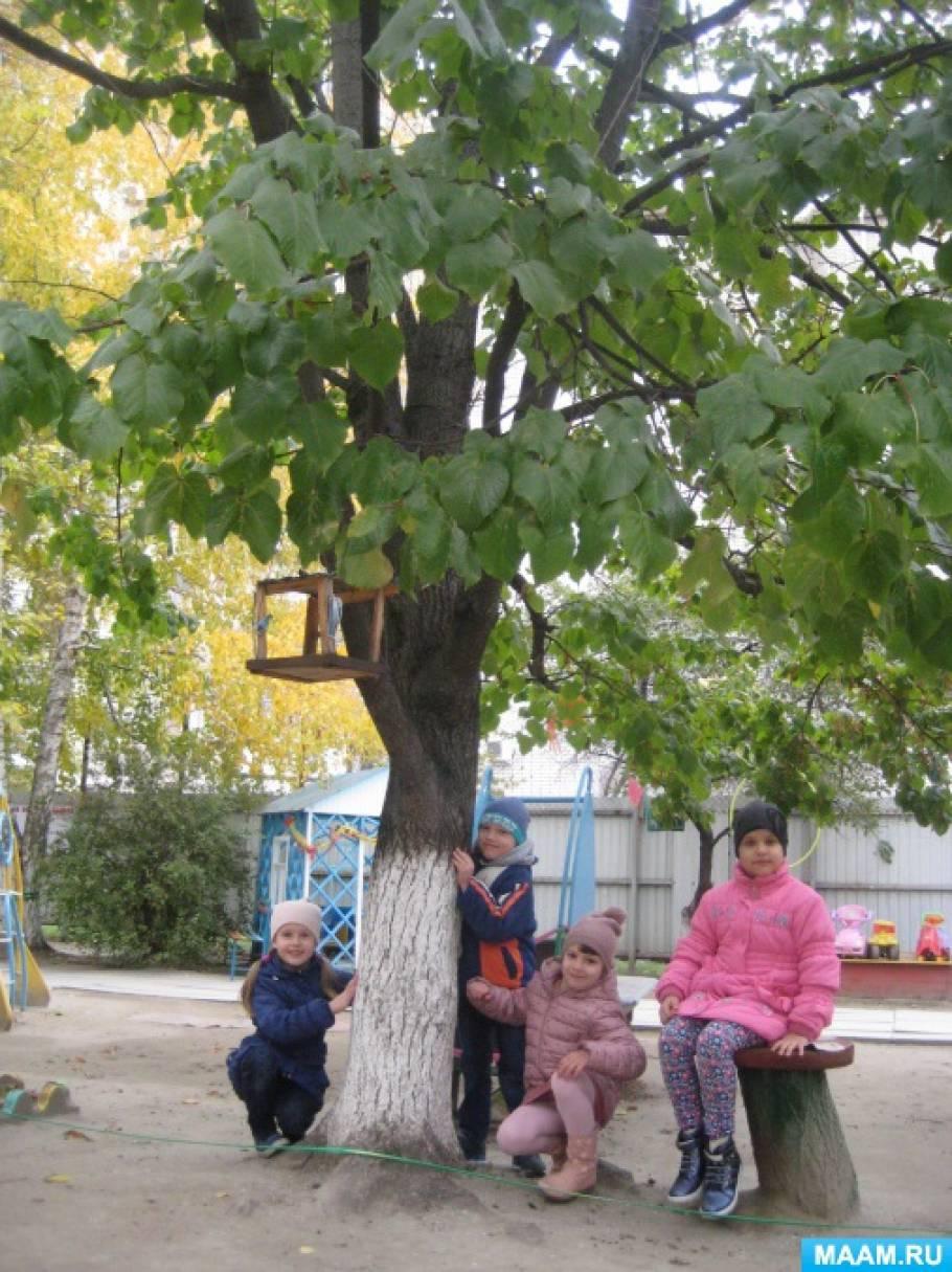 Наблюдение за деревьями на участке детского сада (фотоотчет)