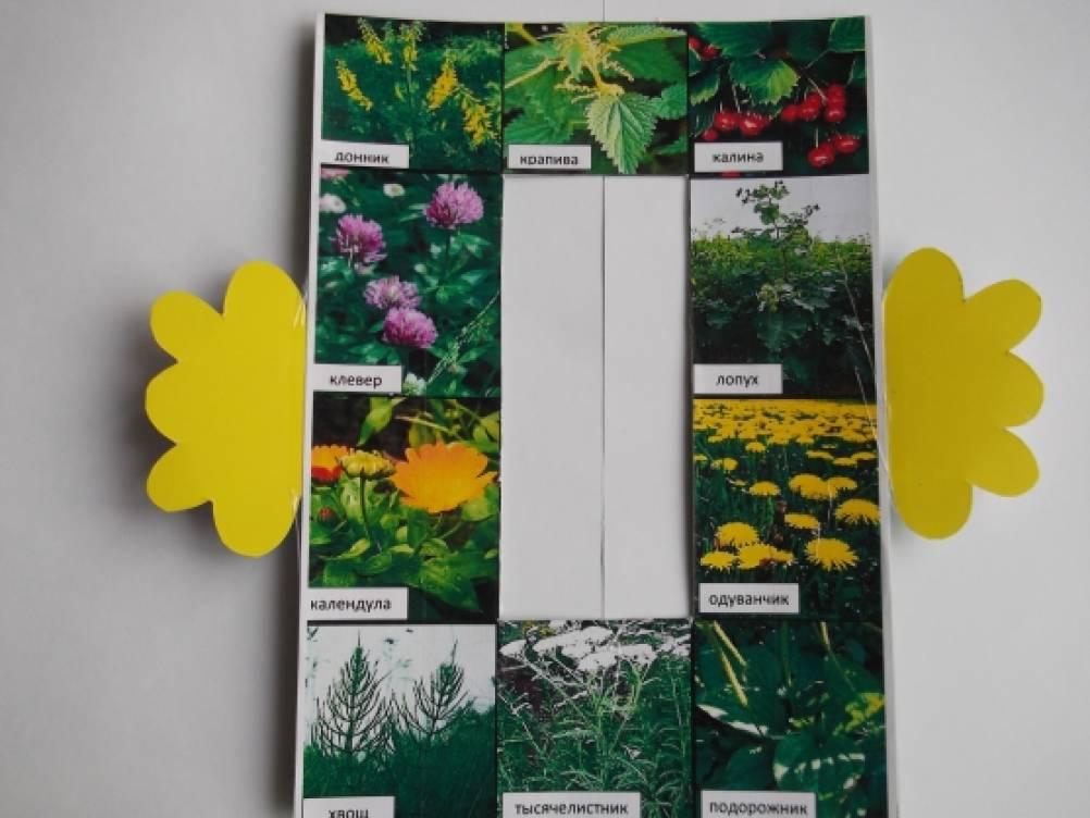 Дидактические игры по знакомству с лекарственными растениями