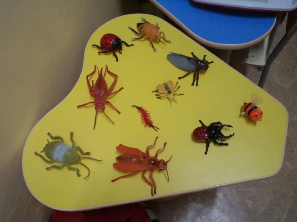знакомства детей с насекомыми