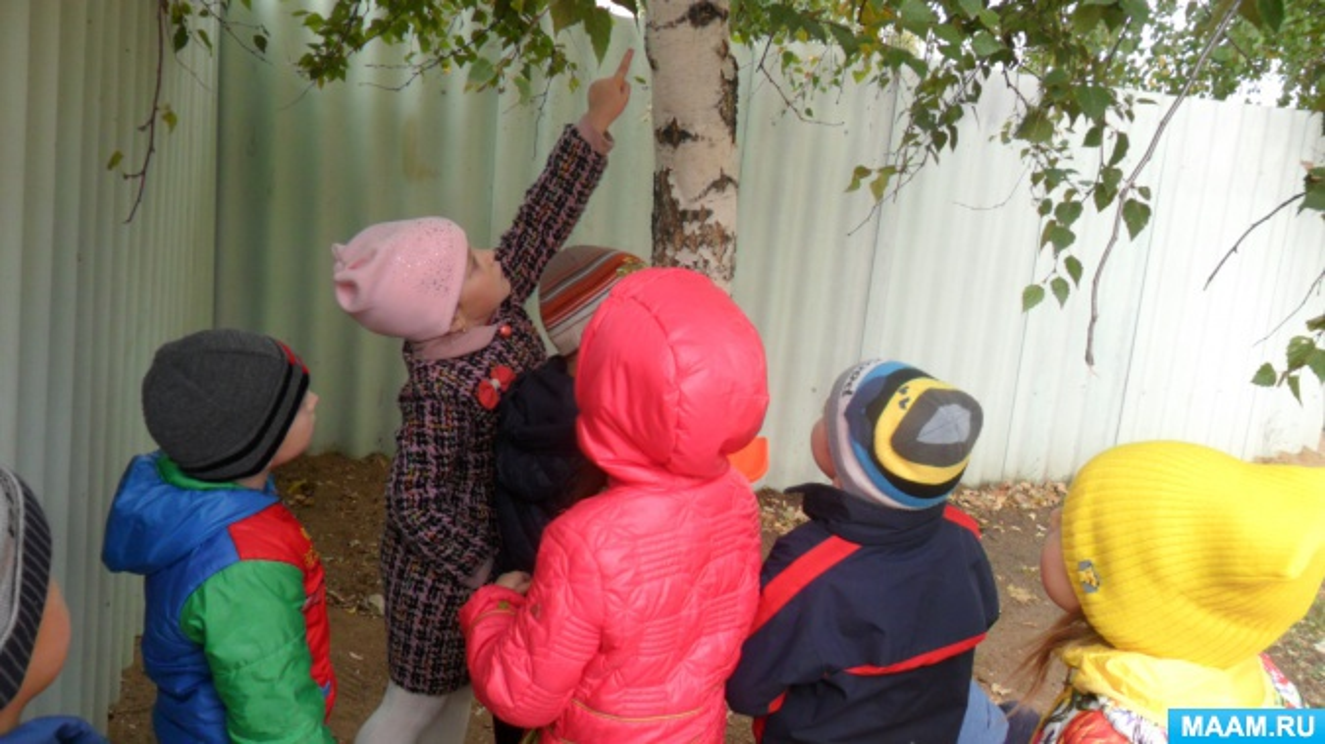 Фотоотчет о наблюдении за насекомыми на прогулке осенью.
