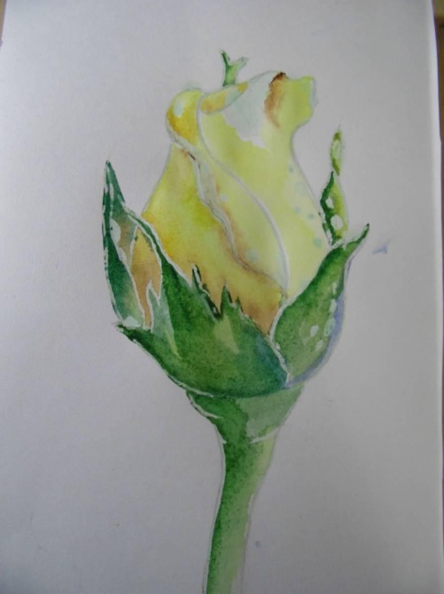 Яндекс мастер класс рисования роз инструкция #1