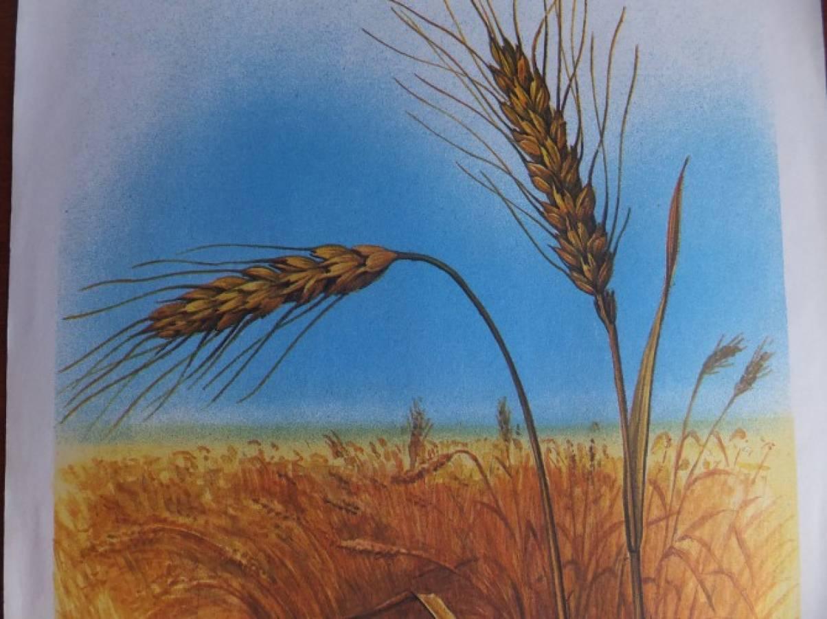 Немецкие, картинки о хлебе и хлеборобах