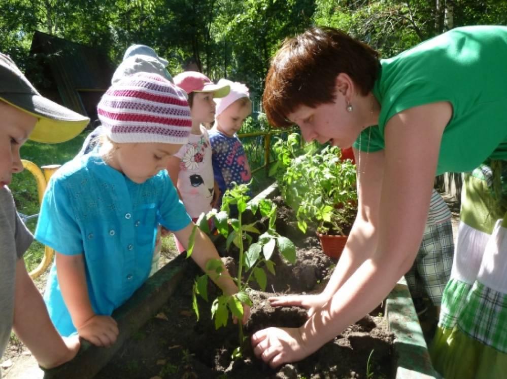 Озеленение участков и газонов - Детский сад. Ру