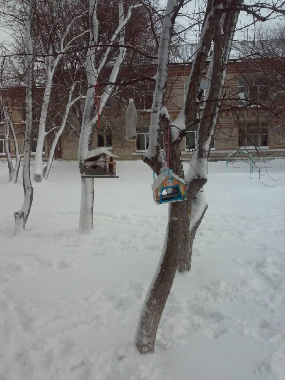 Птицы на участке детского сада (фотоотчет)