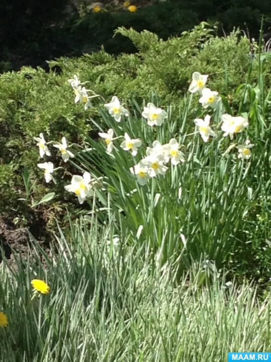 Конспект прогулки «Наблюдение за цветами на клумбе» для старшего дошкольного возраста