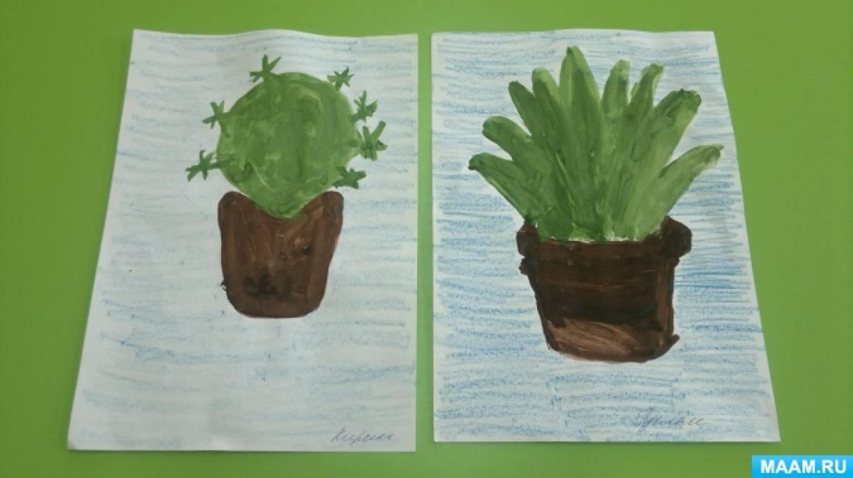 Конспект НОД по рисованию в средне-старшей группе «Комнатные растения»