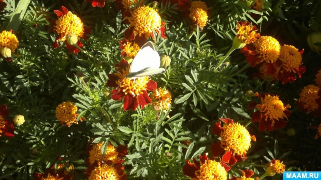 Конспект прогулки «Мы на улице гуляли и вдруг бабочку мы увидали»