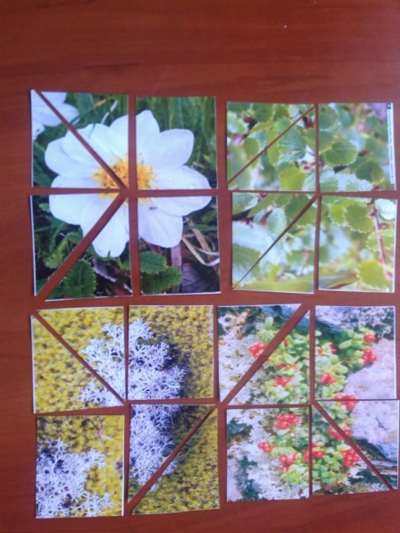 Дидактическая игра «Собери растение»