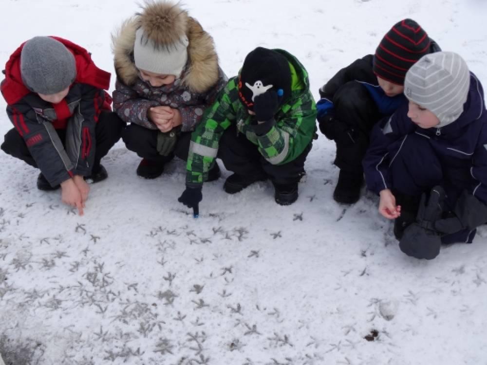 Наблюдения на прогулке «Читаем следы на снегу». Фотоотчёт