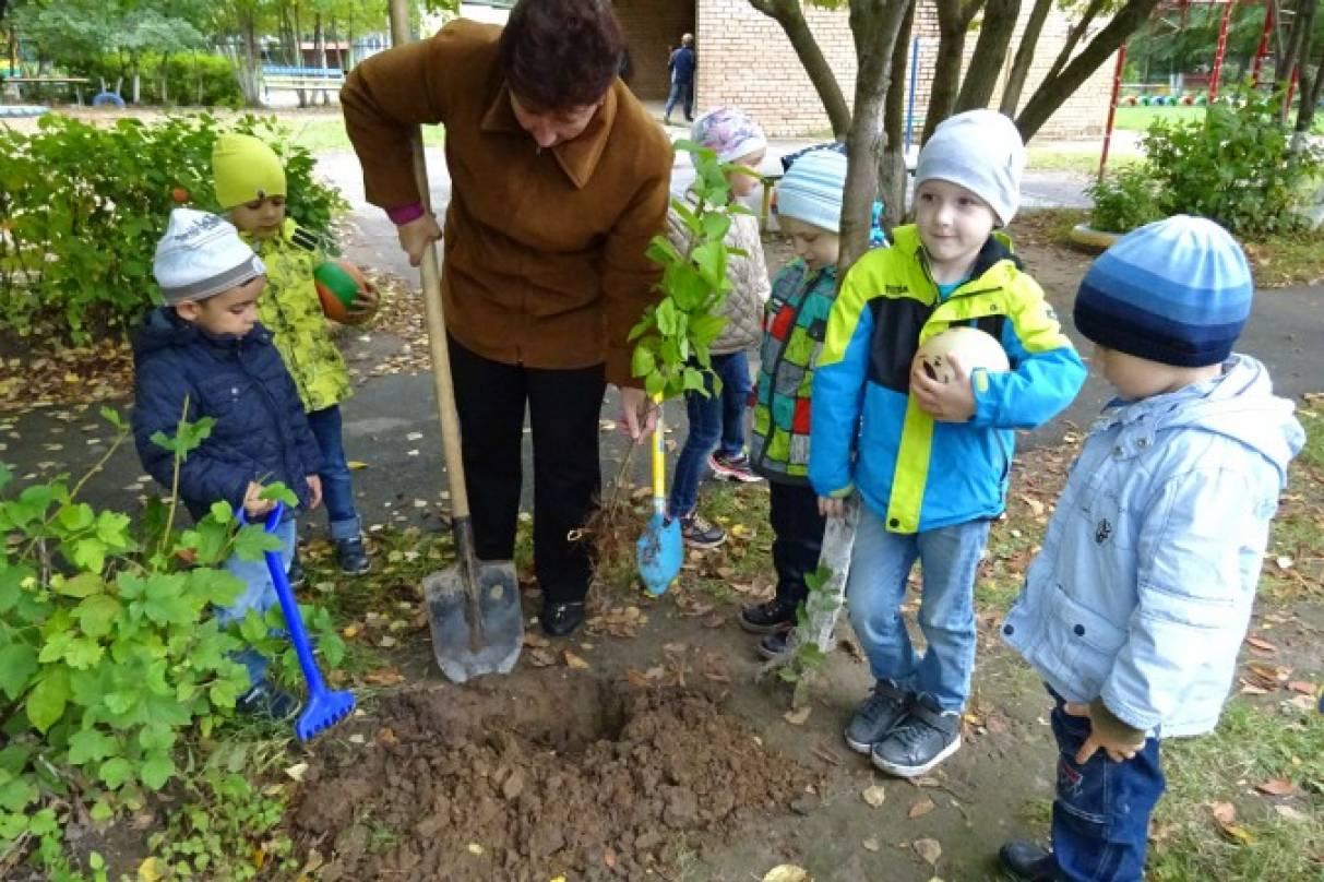 Посадка деревьев в детском саду сценарий