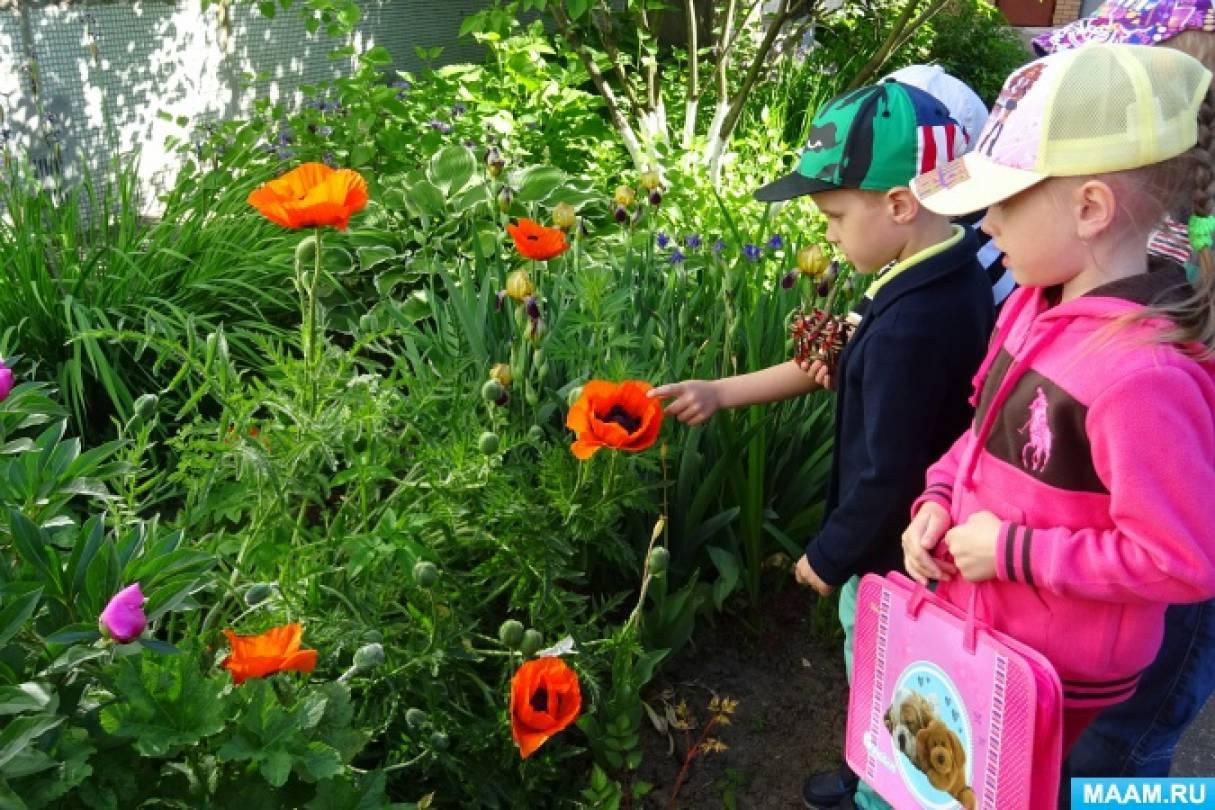 НОД «Вы видите, идут цветочные часы». Методика проведения наблюдений с детьми в природе (фотоотчёт)