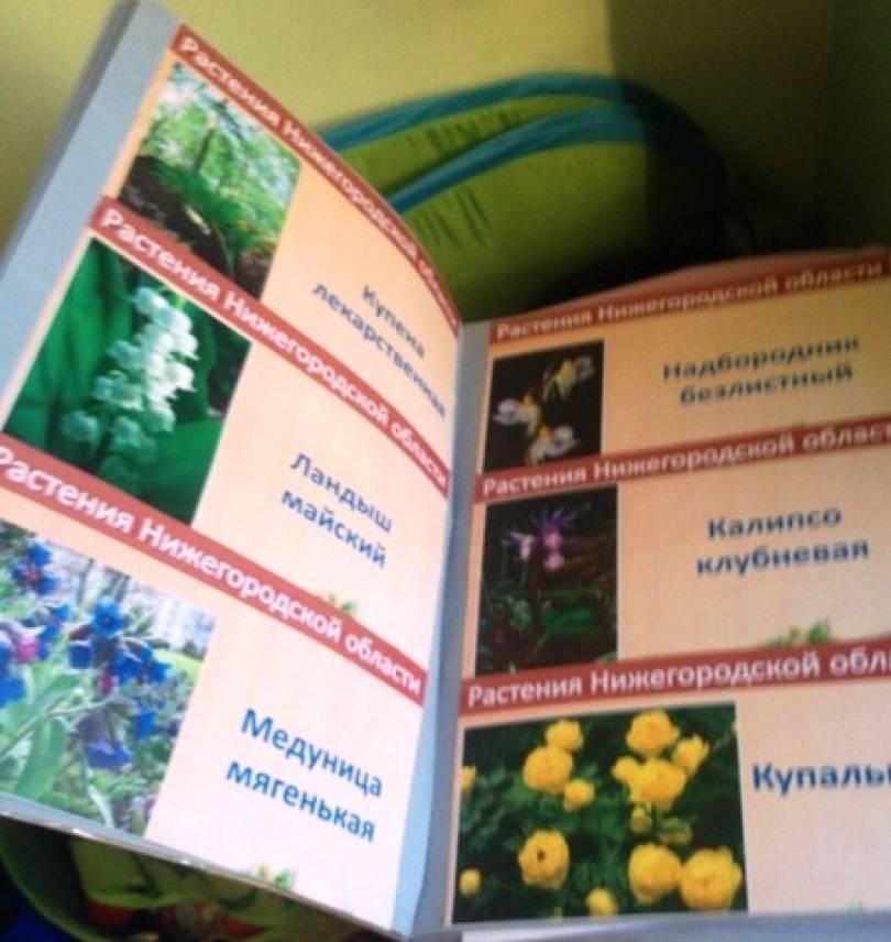 Красная книга своими руками с картинками животные и растения