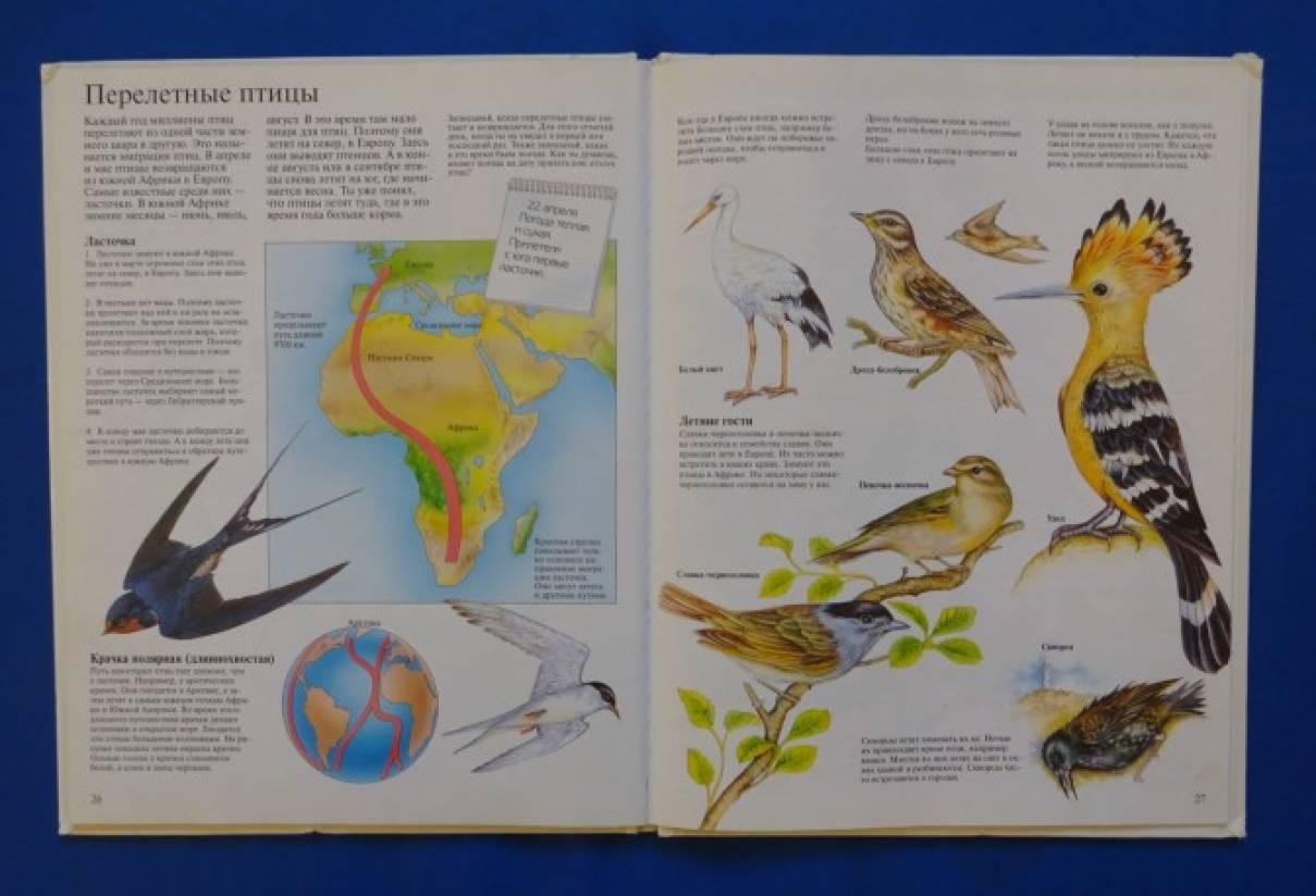 беседа знакомство о птицах