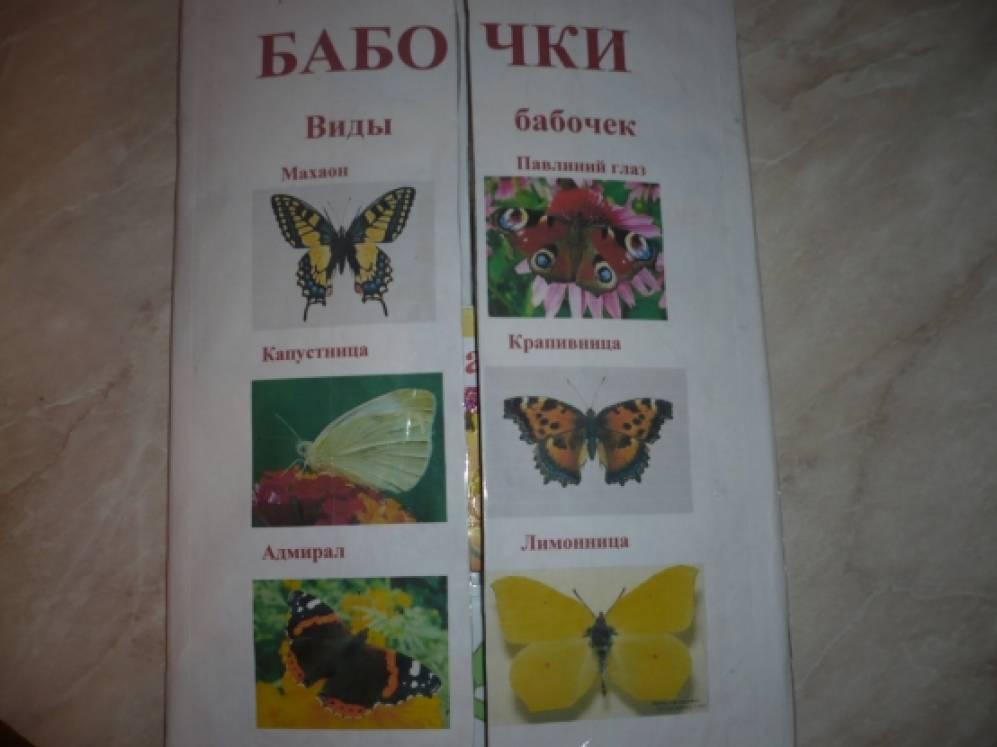 Интерактивная книга (лэпбук) «Бабочки»