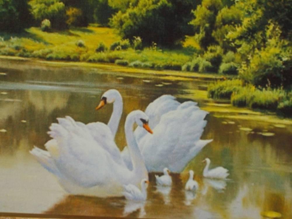 Лебеди Лебеди Белые Лебеди В Небе Над Нами Опять