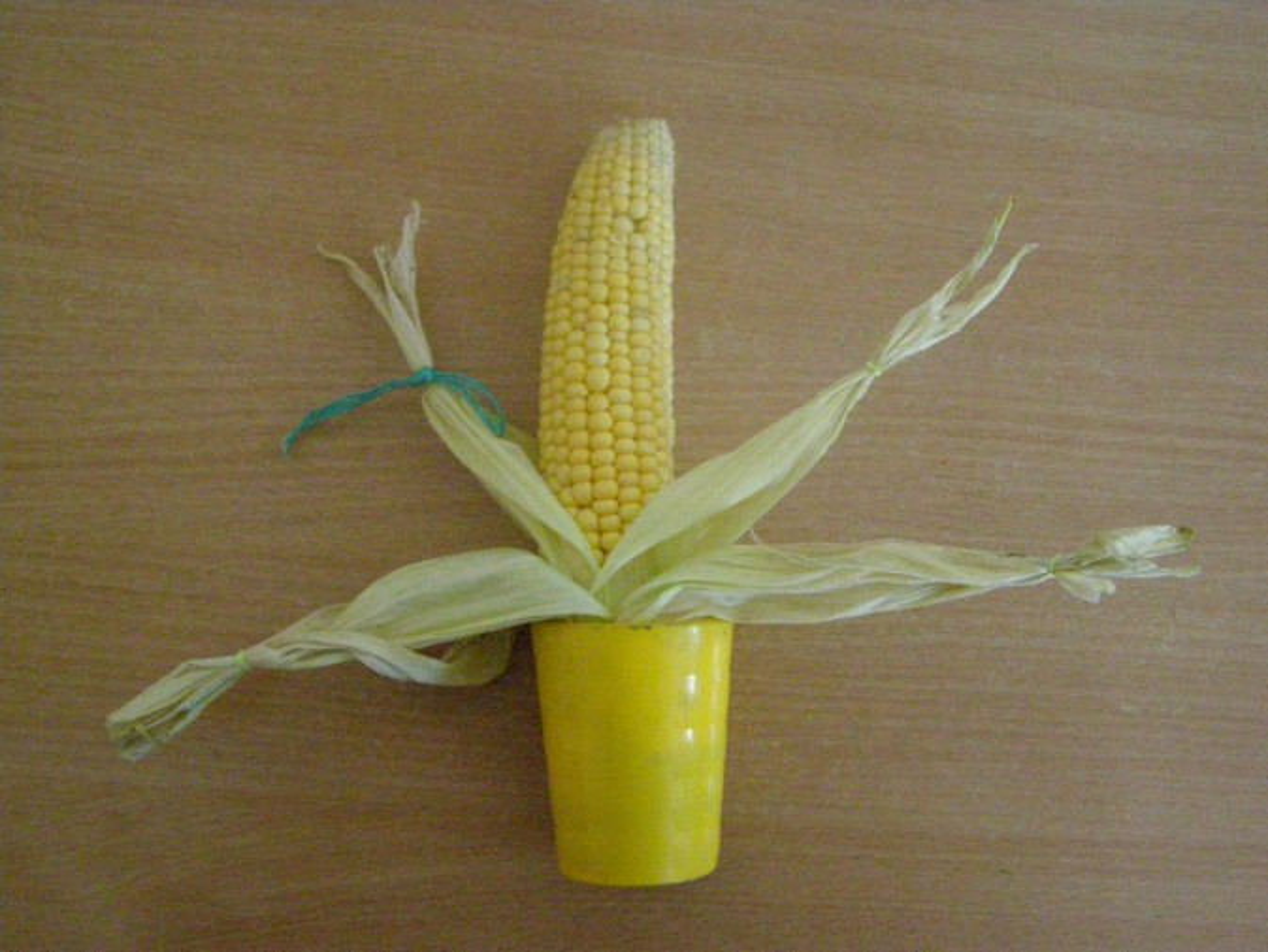 Из початков кукурузыы