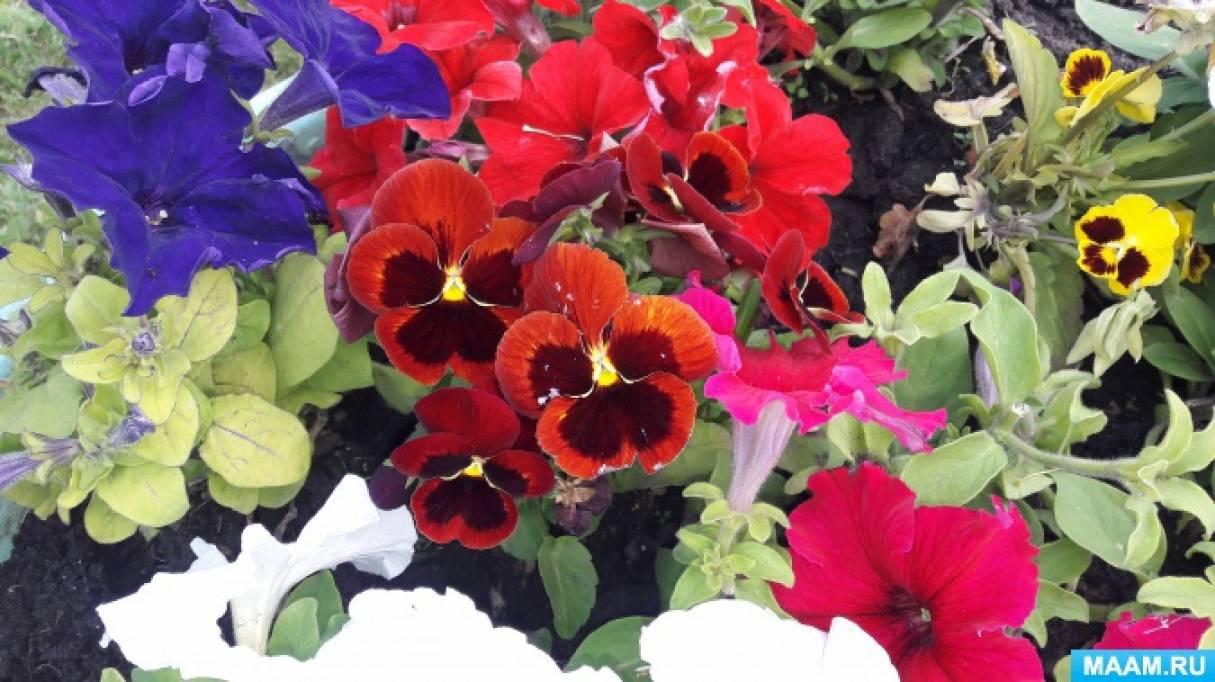 «Разнообразие цветов в клумбах». Взаимодействие с родителями по созданию развивающей среды на участке детского сада. Часть V