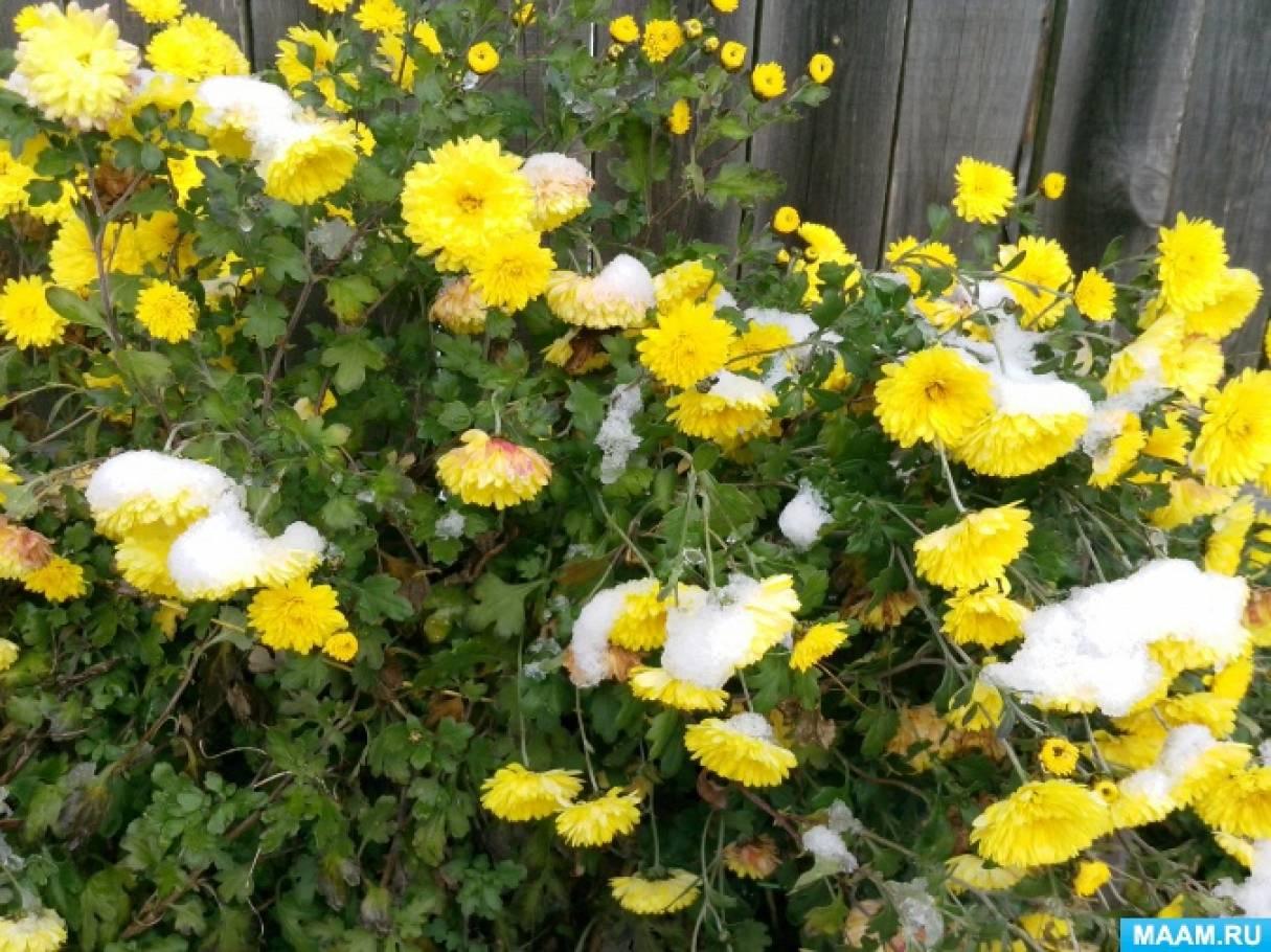 Фотоэтюд «Мой любимый цветник возле дома»