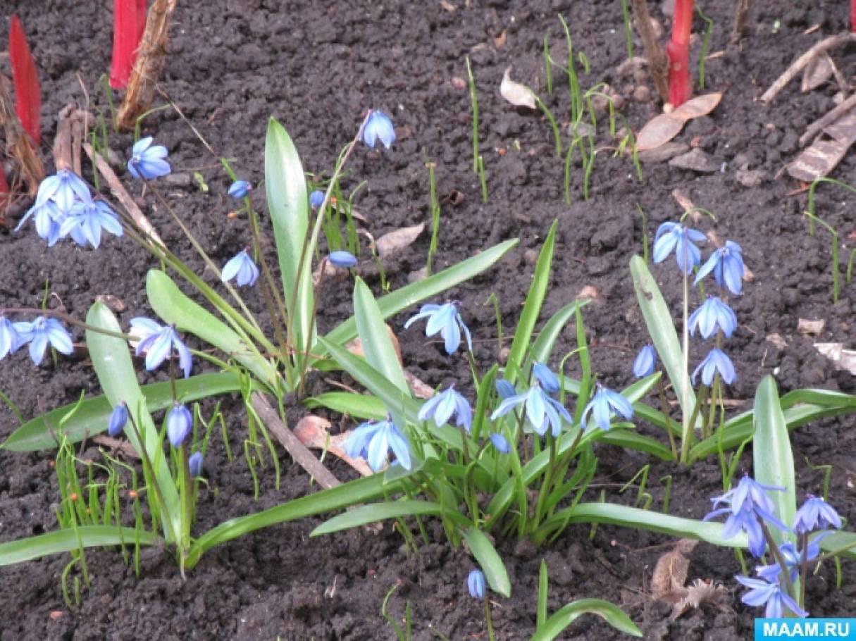 Вот и апрель наступил-весна шагает семимильными шагами (фотозарисовка)