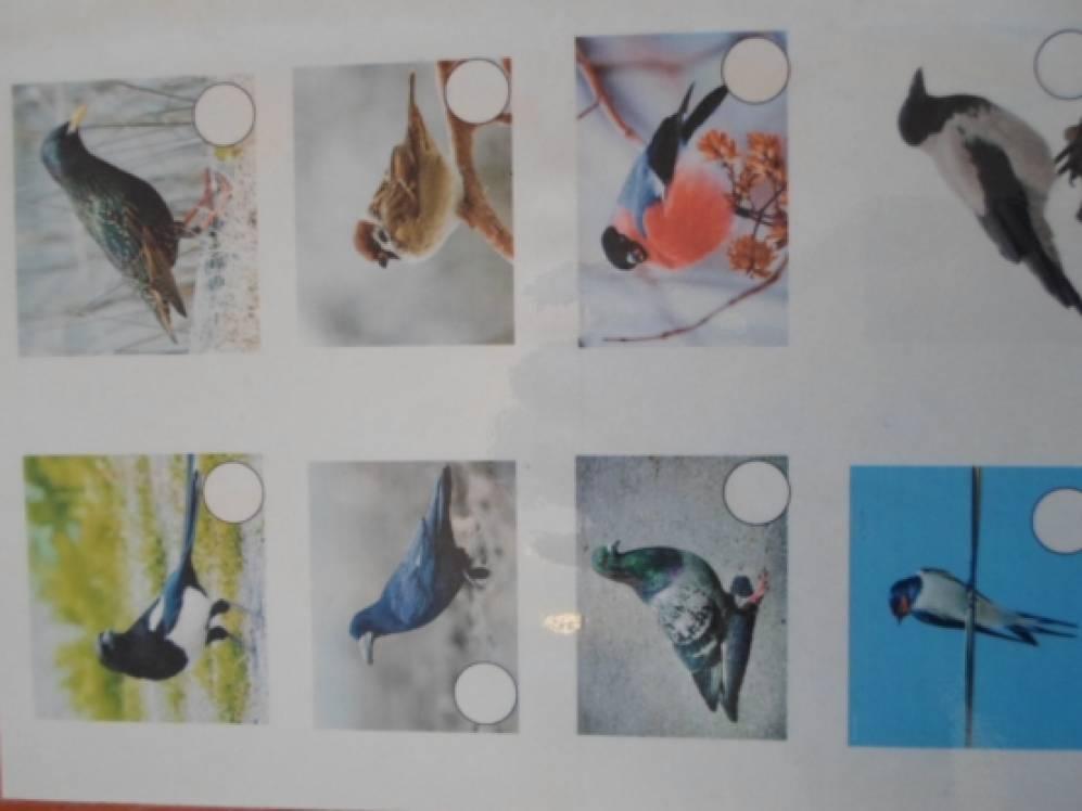Дидактическая игра по лексической теме «Птицы»
