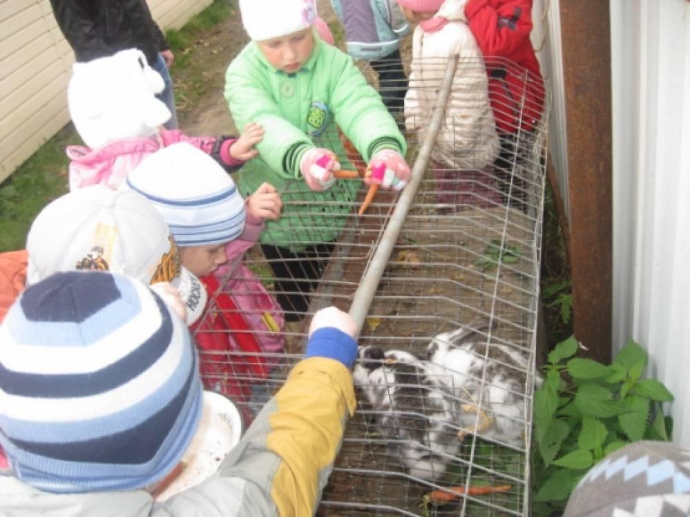 знакомство дошкольников домашними животными
