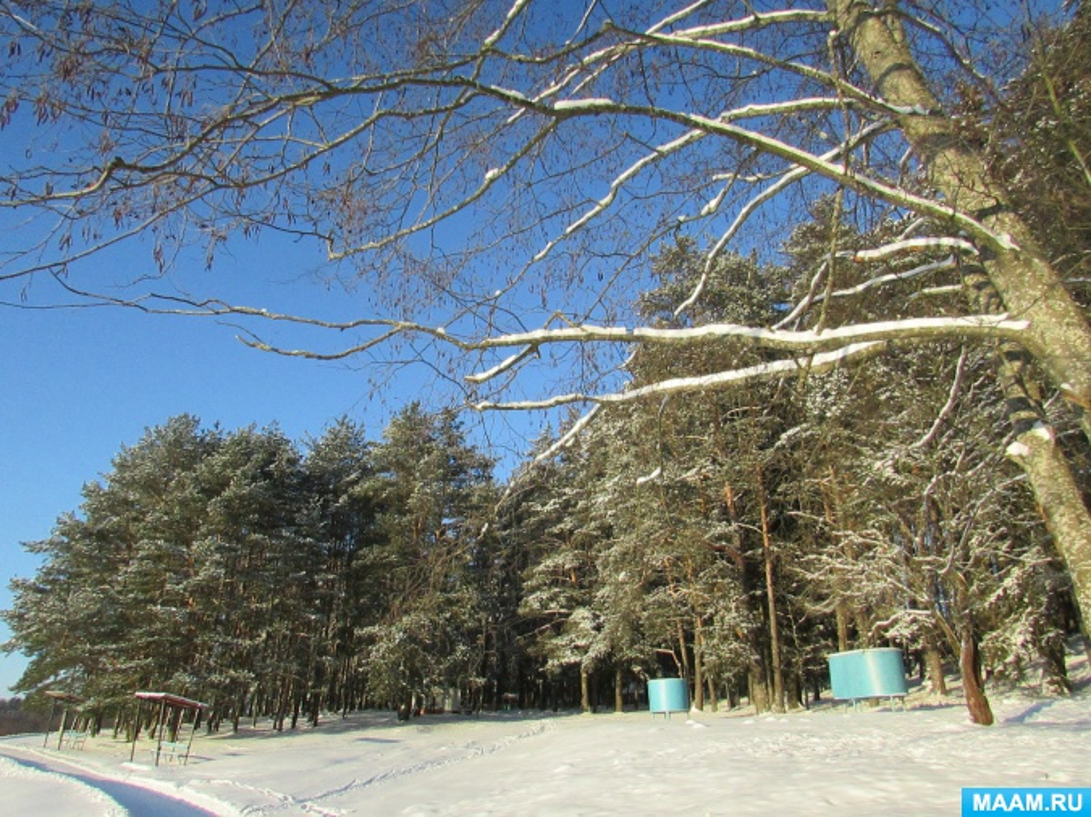 Солнечная зимняя природа картинки