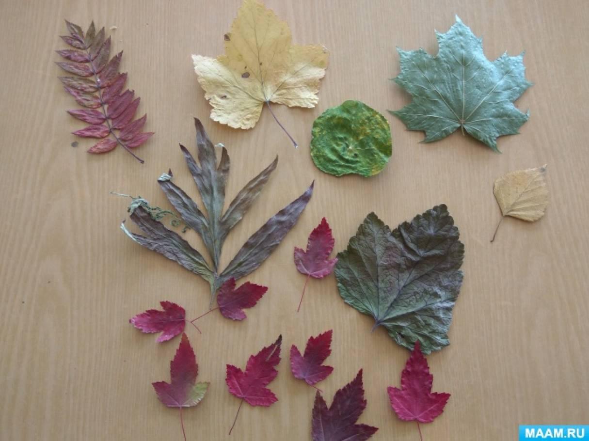 Мастер-класс по аппликации из сухих осенних листьев «Ёжик» в средней группе