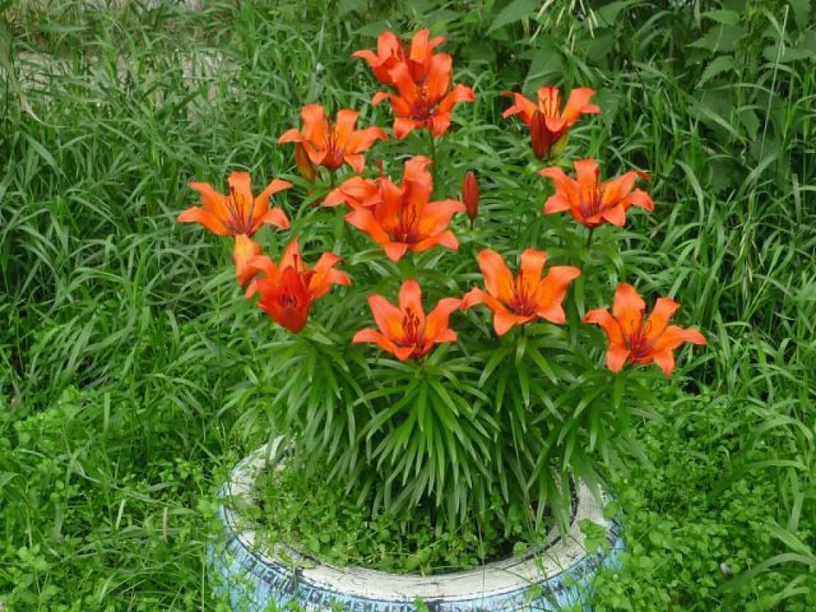 Пустырь превратился в цветущий сад. Оформление участка
