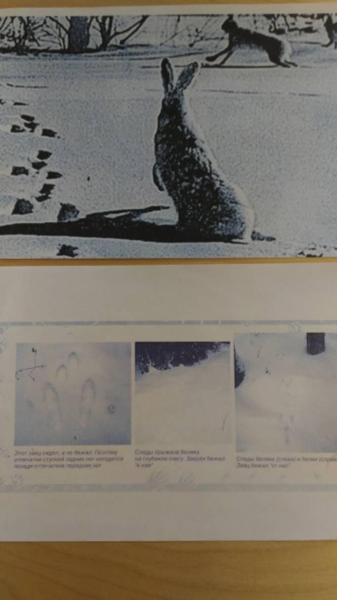 Проект «Следы на снегу» (фотоотчёт)