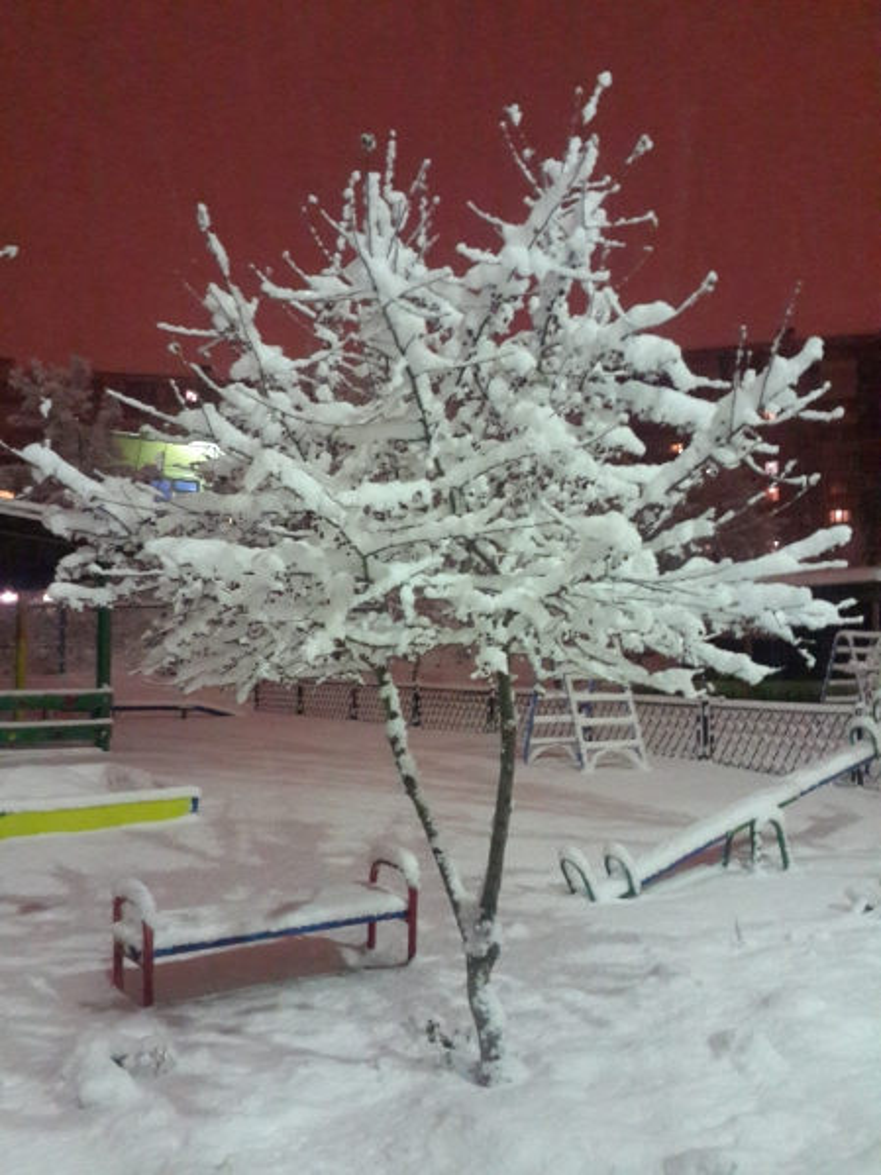 Первый снег осенью картинки