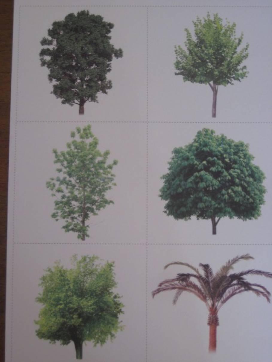 Дидактическая игра «Деревья»
