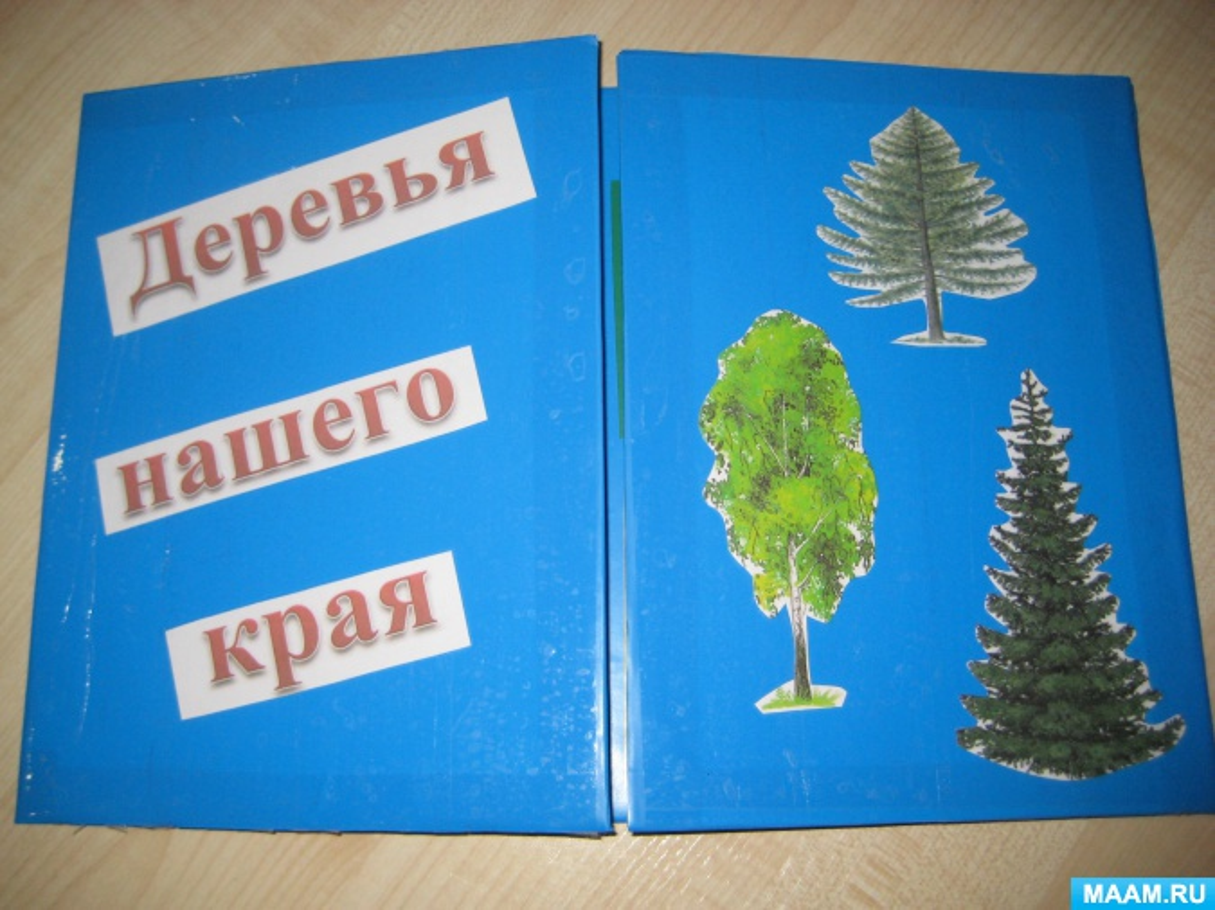 Экологический лэпбук «Деревья нашего края» во второй младшей группе