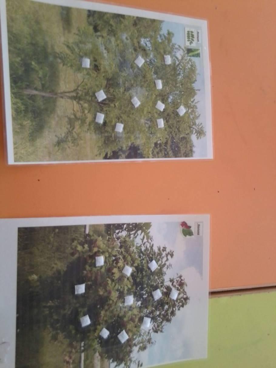 Дидактическая игра «Деревья и кустарники нашего города»