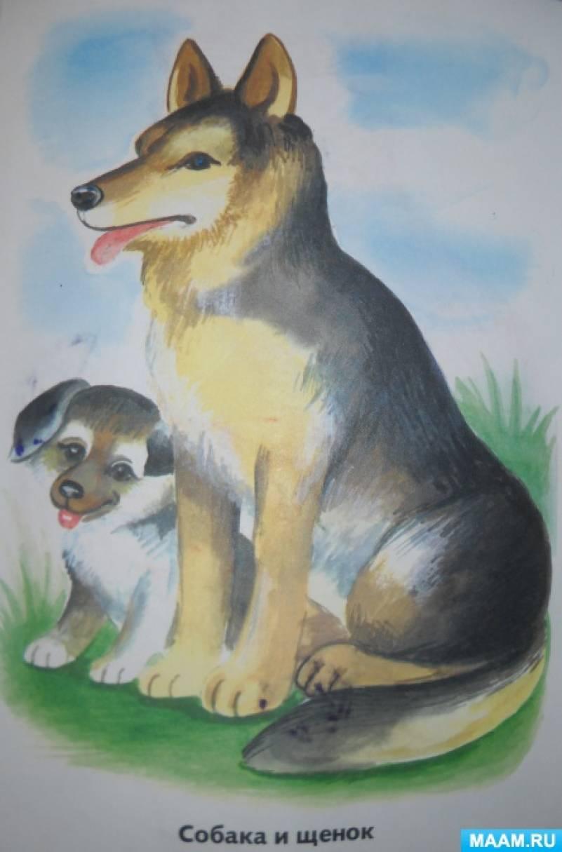 Домашние Животные и их детеныши Учим животных Развивающие мультики ... | 675x445
