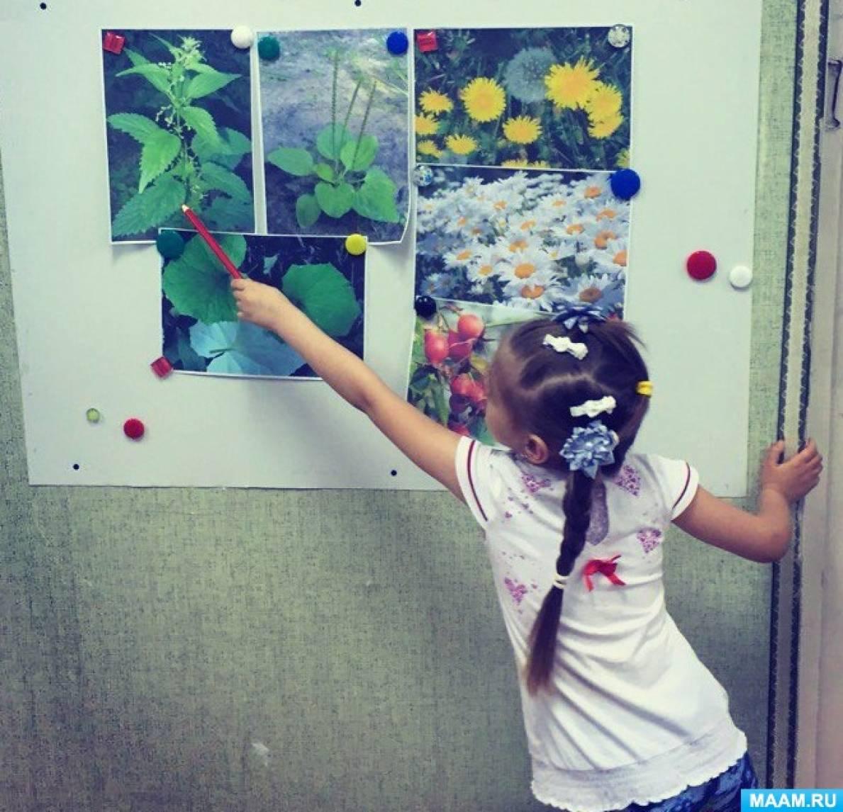 знакомство с лекарственными растениями в средней группе