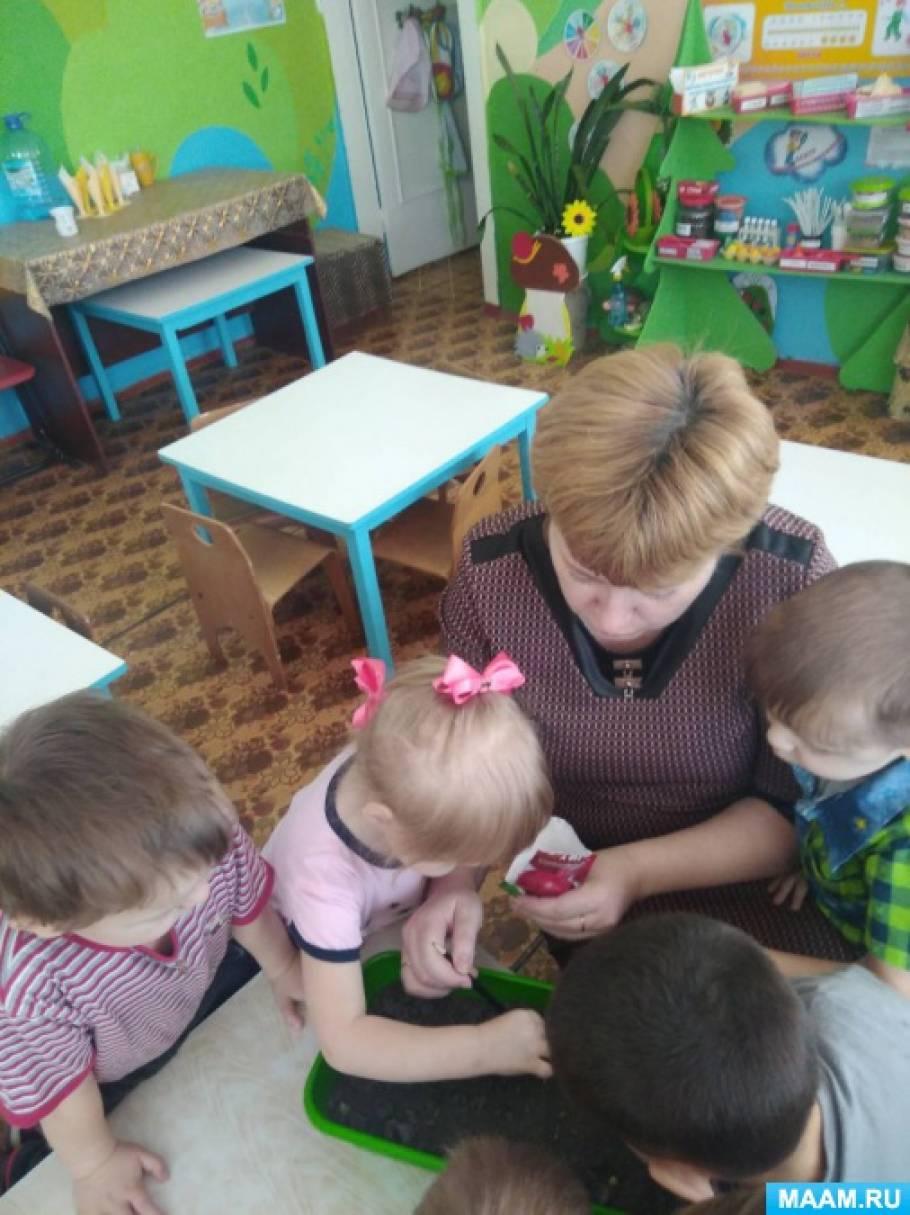 Мини-огород на подоконнике «В гостях у бабушки» во второй младшей группе